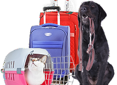 travel-cat-dog_edited.png