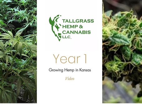 Growing hemp in Kansas, year one