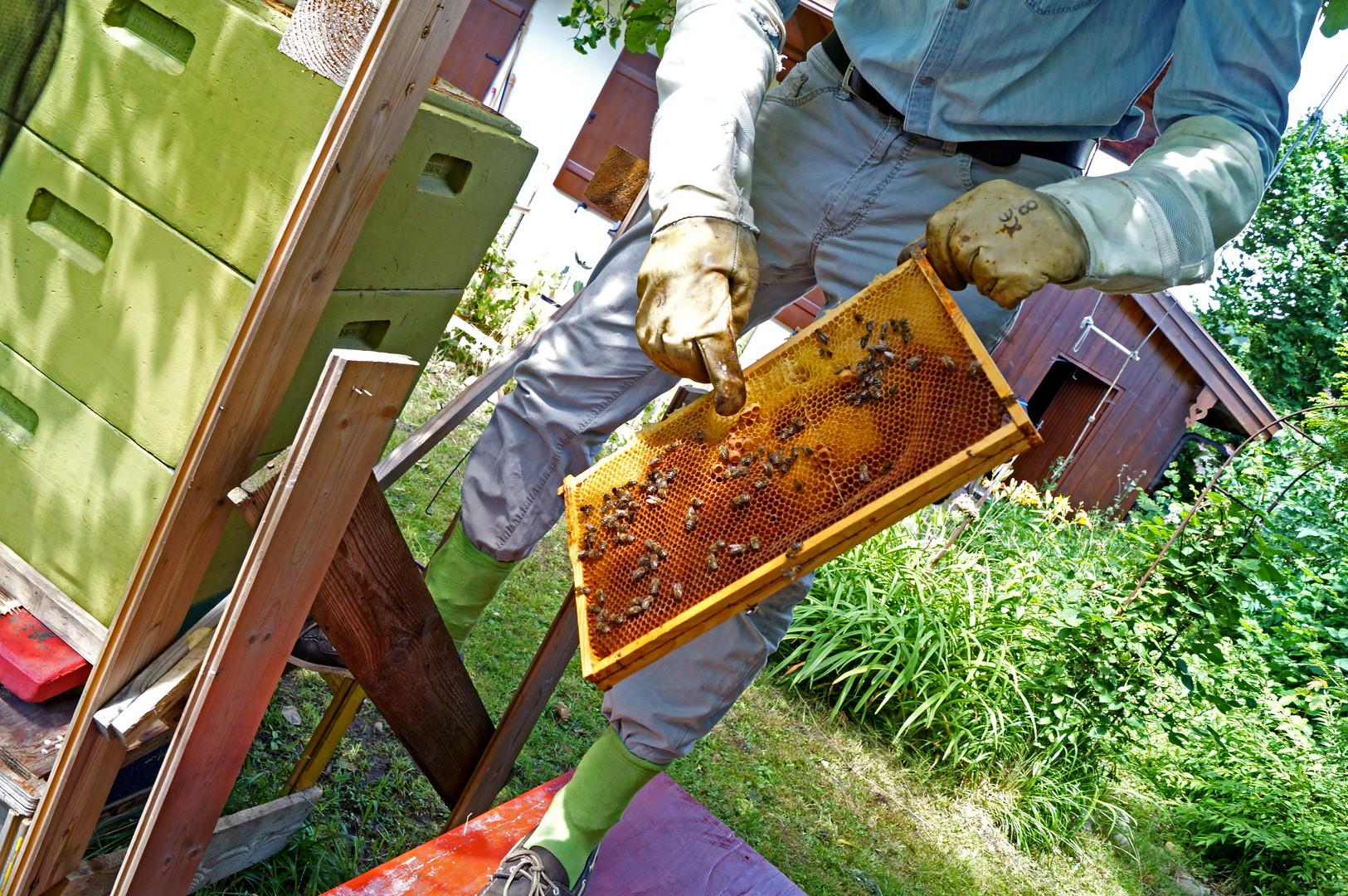 Die Waben-Qualität kann je nach Bienen-Art variieren.
