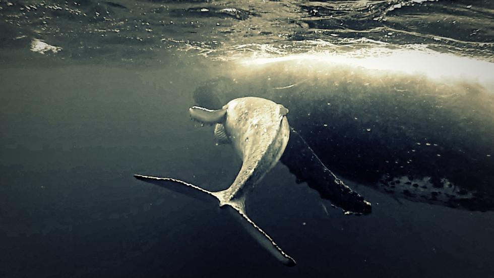 Tonga - Königreich der Wale III