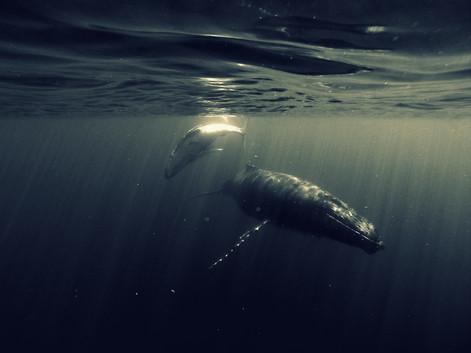 Tonga - Königreich der Wale II