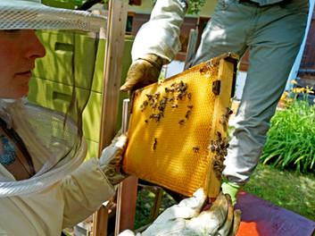 Freddy zeigt mir die Waben der Bienen.