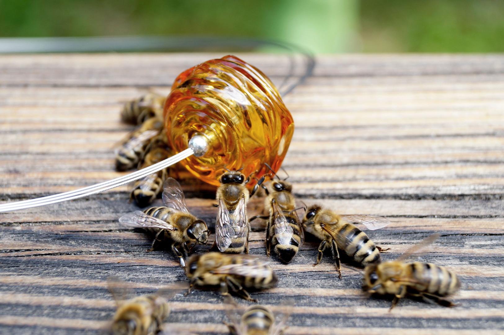 Den Bienen gefällt wohl die Honig-Perle.