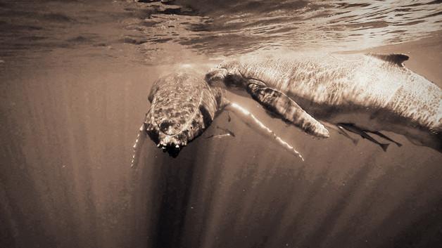 Tonga - Königreich der Wale I