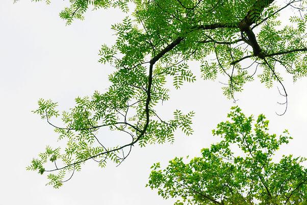image-tree-sky.jpg