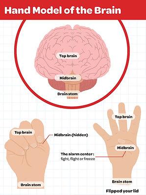 hand model of the brain.jpg