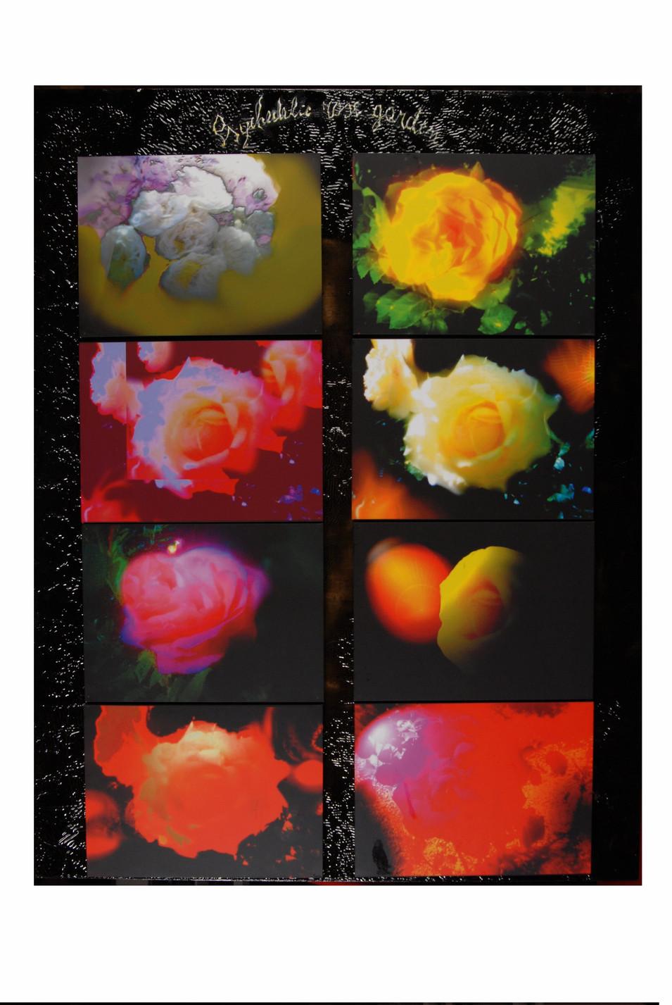 Psychedelic Rose Garden