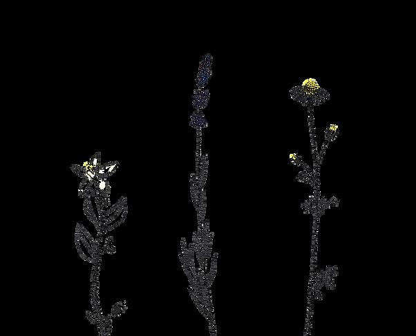 ob_a5bf60_14-020-fleurs-aromatherapie-be