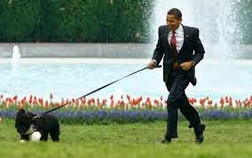 Open letter to Obama's dog, world's most important pet