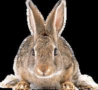 32-gray-rabbit-png-image.png