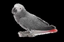 papugaai.png