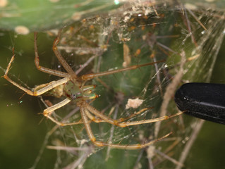 Sharing, Caring, and Thievery: Arachnid Behavior and Interaction
