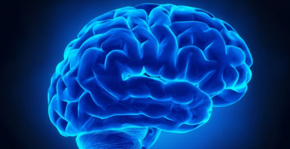 Neuropsykologi omfatter strukturerer og processor i hjernen, der regulerer adfærd og tænkning.