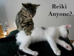 Cats doing Reiki