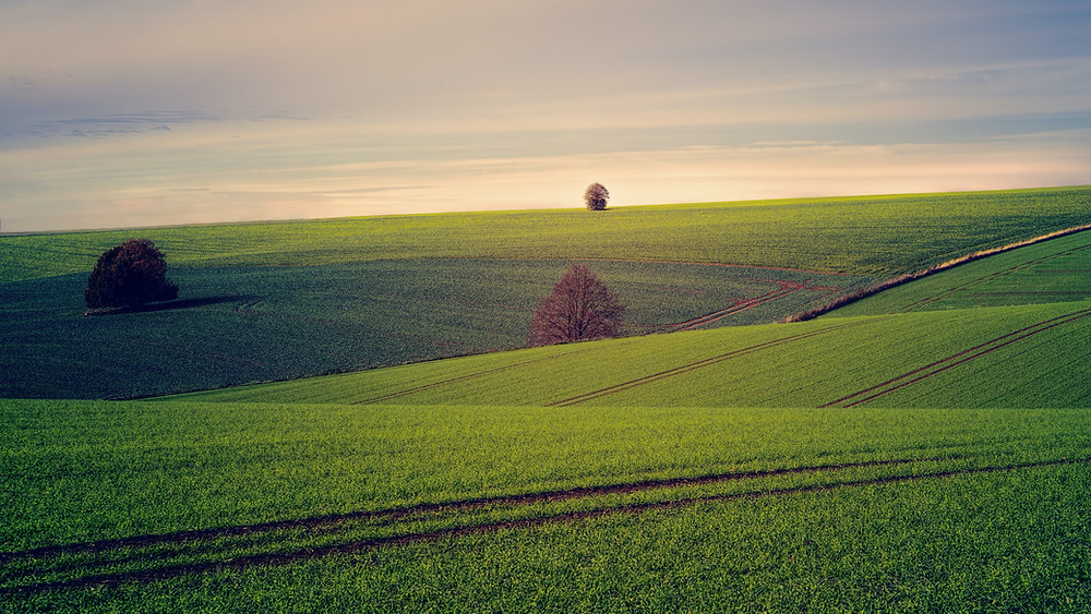 space, fields, nature, Reiki, Christina Costa