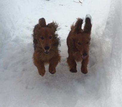 Ivar og Elvis