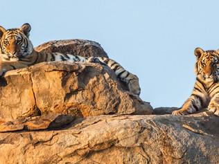 tiger-valley-8.jpg