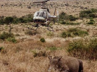 Rhino+heli-3-OP.jpg