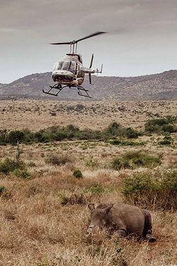 Rhino+heli-2-OP.jpg