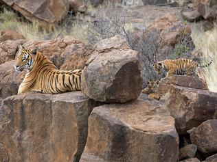 tiger-valley-1.jpg