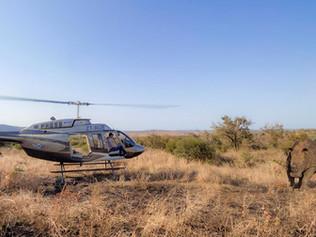 rhino-landscape2.jpg