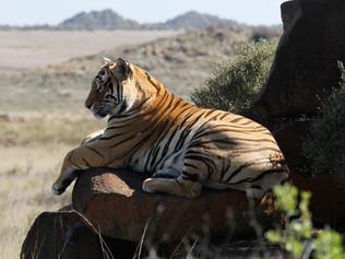 tiger-valley-55.jpg