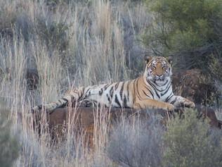 tiger-valley-6.jpg