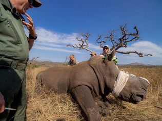 Rhino-conservation-OP.jpg
