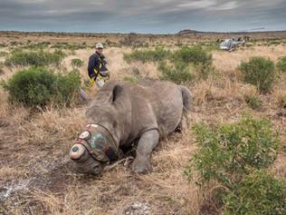 Rhino+heli-OP.jpg