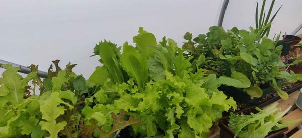 chris salad_leaves.jpg