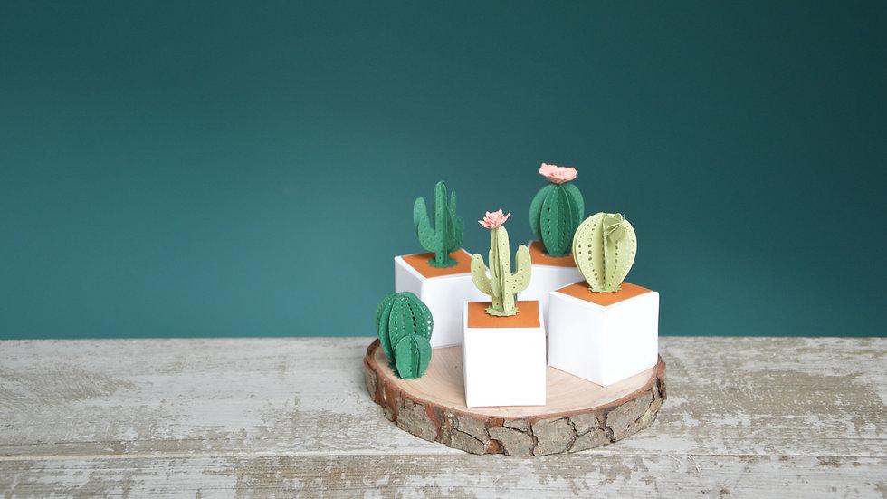 Scatolina Cactus Box porta confetti