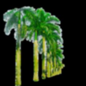 tropical-png-8-dc4c405f84ab8286f8a71bca3