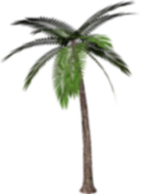 palm_tree_PNG2491.png