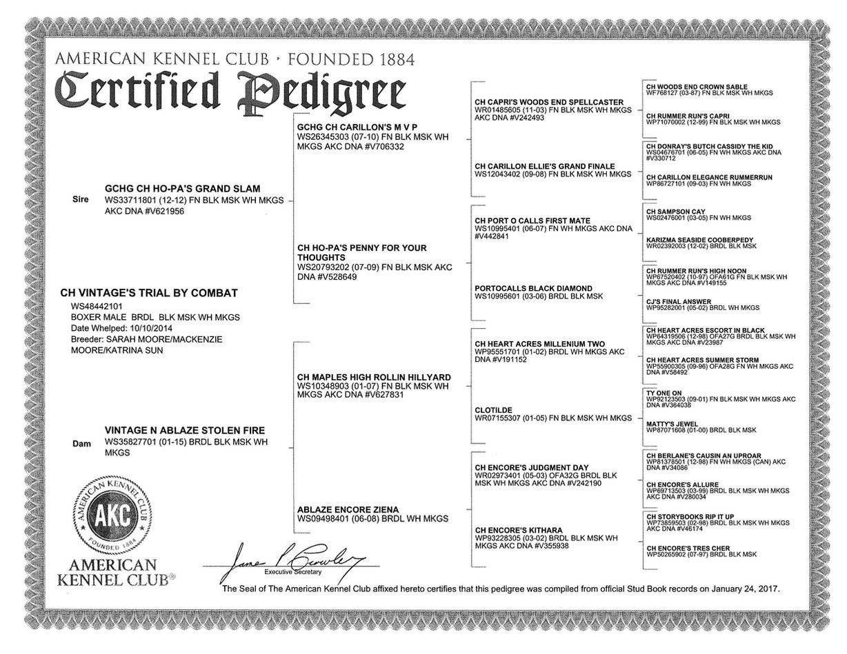Tyrion Certified Pedigree