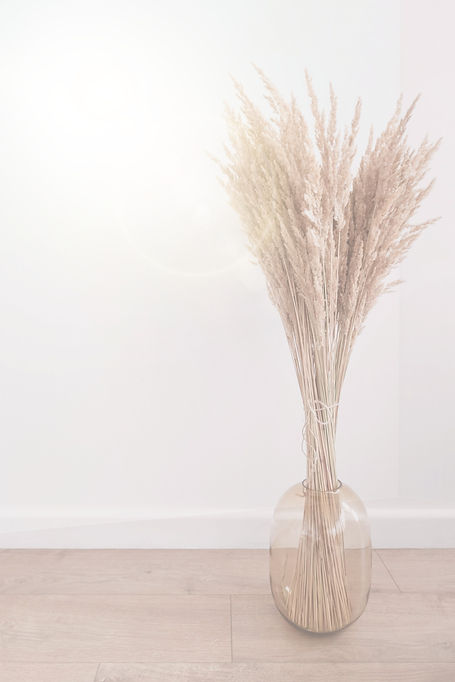 Pampas%2520grass%2520on%2520a%2520white%