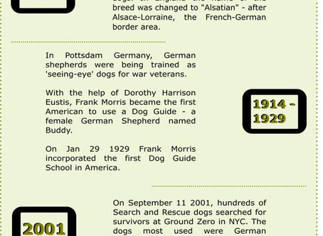 Some fun facts about German Shepherds