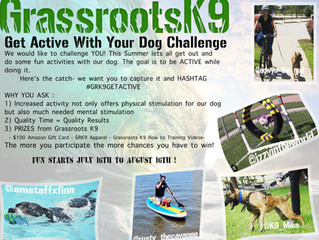 Lets get Active with our Dogs !