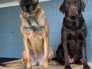 5 Position Dog Training Challenge !