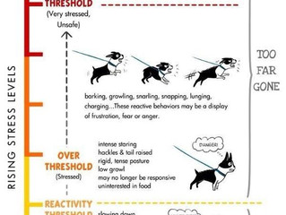 Great Reactivity Chart!