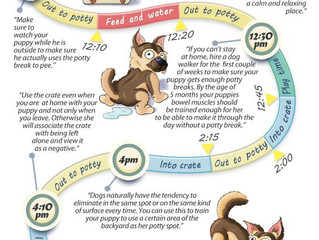 Lets help with your potty training...