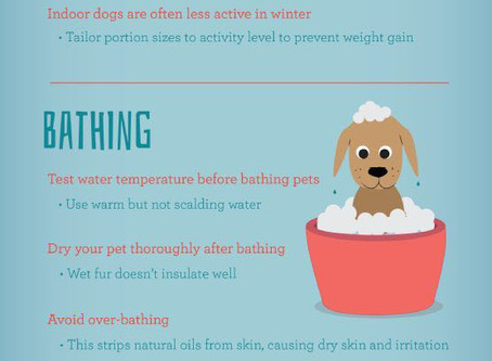 Winter Time Tips