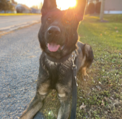 Ottawa GRK9 of the Month