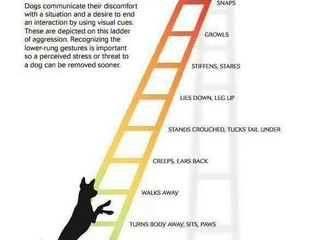 The Canine Ladder of Aggression