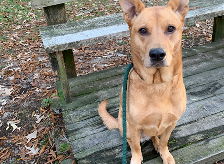 Maryland GRK9 of the Month