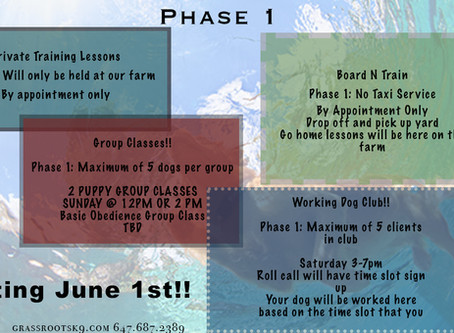 Covid-19 Update Phase 1