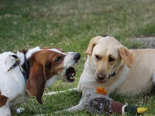 Territorial Dog Training Tips
