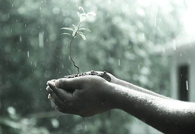 hands holding a plant in rain, hope, seed - image found in Arise & Shine Arts and Entertainment (ASAE) Christian Community helping emerging artists and creatives by providing ministry, education and resources.