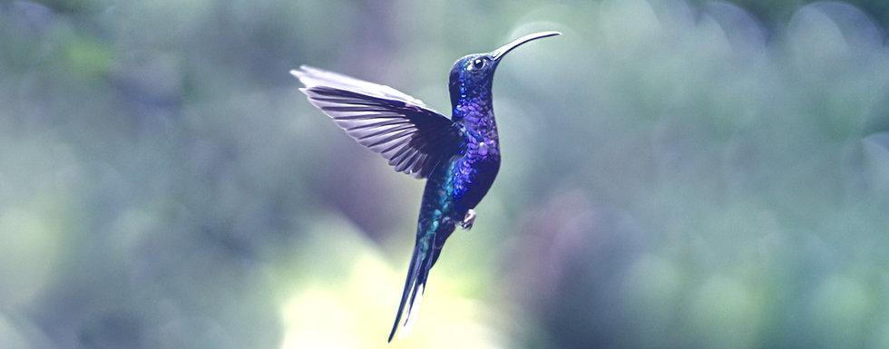 Beautiful%252520Hummingbird%252520in%252