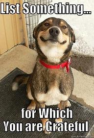 grateful dog.jpeg