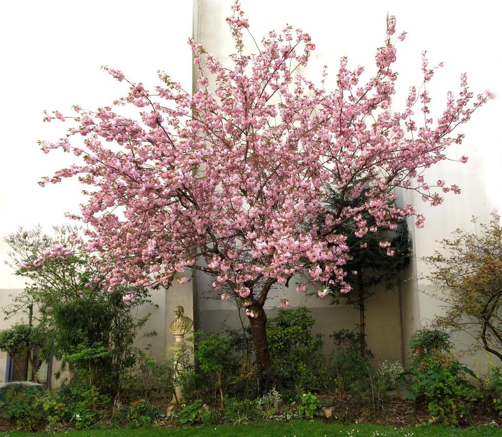 Blooming in Paris